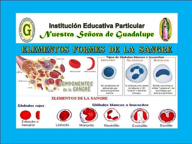 VI - Unidad : Biología TEMA: ELEMENTOS FORMES DE LA SANGRE I.E.P «Nuestra Señora de Guadalupe» LA SANGRE PLASMA SANGUÍNEO ...