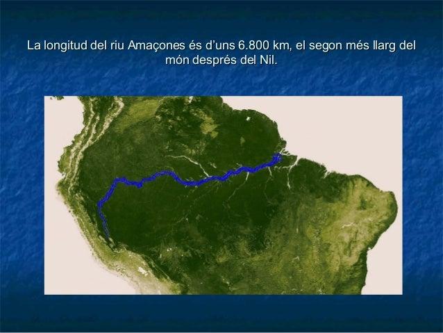 La longitud del riu Amaçones és d'uns 6.800 km, el segon més llarg delLa longitud del riu Amaçones és d'uns 6.800 km, el s...
