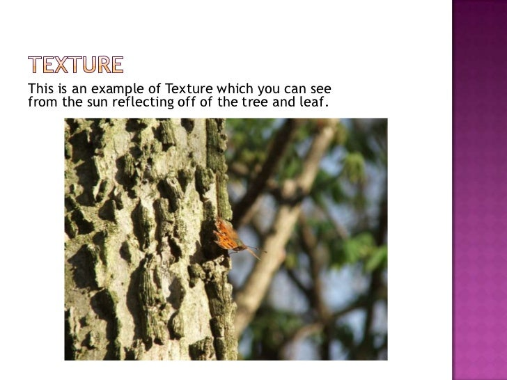 Texture<br />This is an example of Texture which you can see from the sun reflecting off of the tree and leaf.<br />