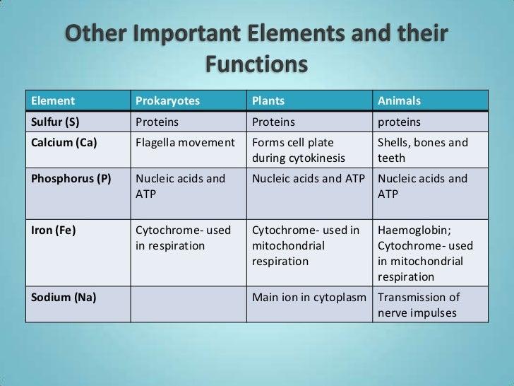 Four major macromolecules