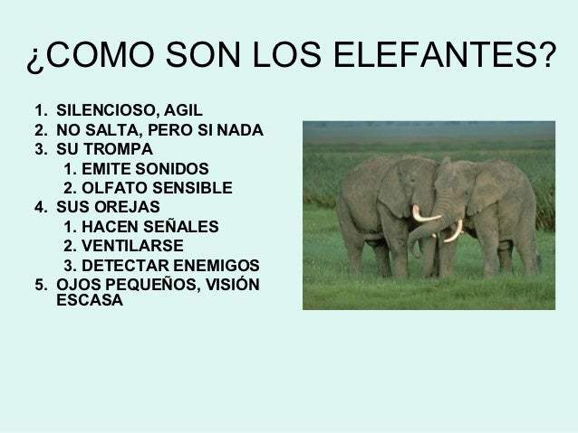 ELENA PEÑA Y LOS ELEFANTES Slide 2