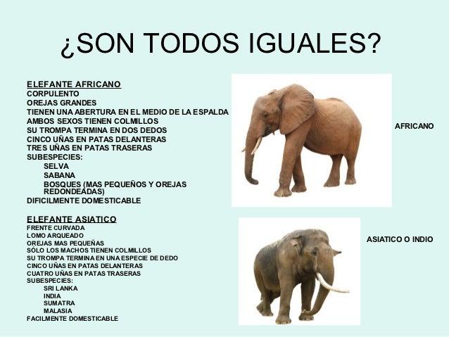 ELENA PEÑA Y LOS ELEFANTES Slide 3