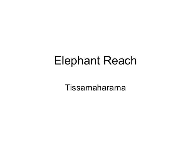 Elephant Reach Tissamaharama