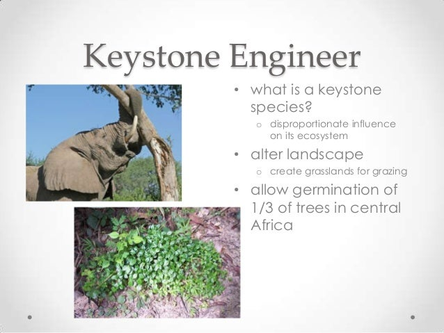 keystone species This paper discussed the keystone species concept and introduced the typical  characteristics of keystone species and their identification in.