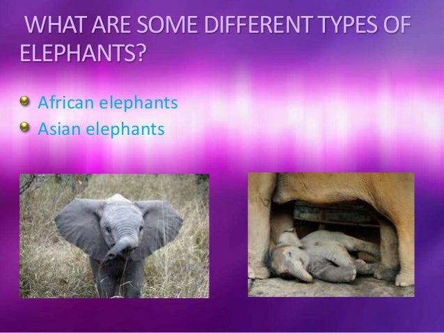elephants 5k