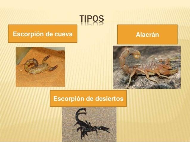 TIPOS Alacrán Escorpión de cueva Alacrán Escorpión de desiertos