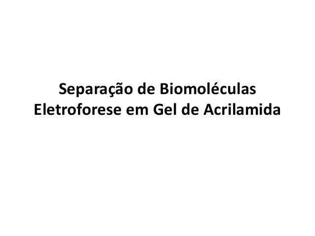 Separação de Biomoléculas Eletroforese em Gel de Acrilamida
