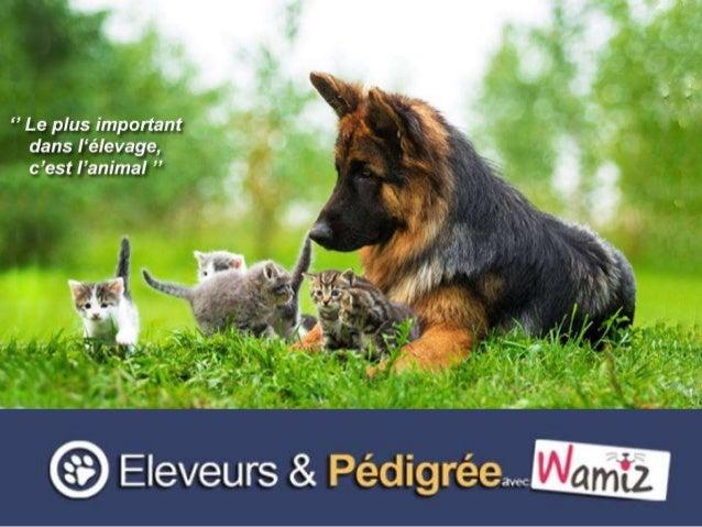 Notre histoire Mieux comprendre le monde de l'élevage Où acheter son chien ? Le bon compagnon grâce à Eleveurs & Pedigree ...