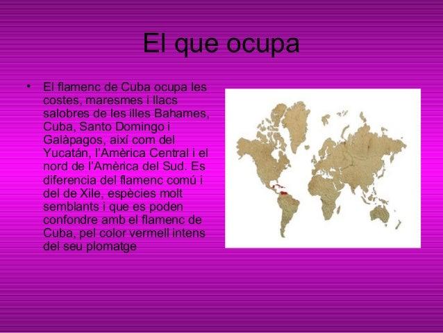 El que menja• Els flamencs són uns animalsfiltradors que s'alimenten depetits crustacis i altresinvertebrats microscòpics ...