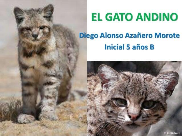 EL GATO ANDINO  Diego Alonso Azañero Morote  Inicial 5 años B