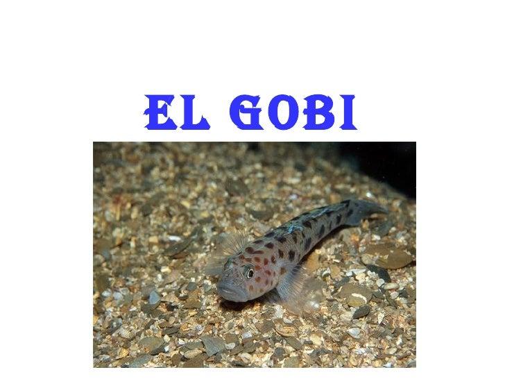 El Gobi