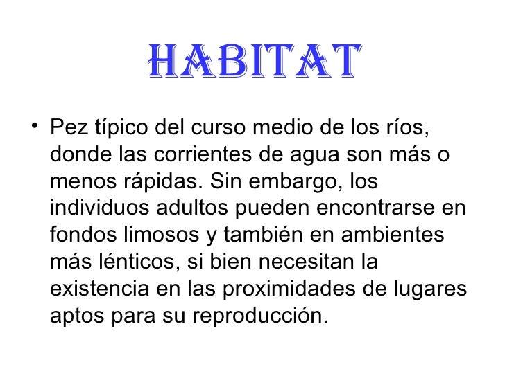 Habitat <ul><li>Pez típico del curso medio de los ríos, donde las corrientes de agua son más o menos rápidas. Sin embargo,...