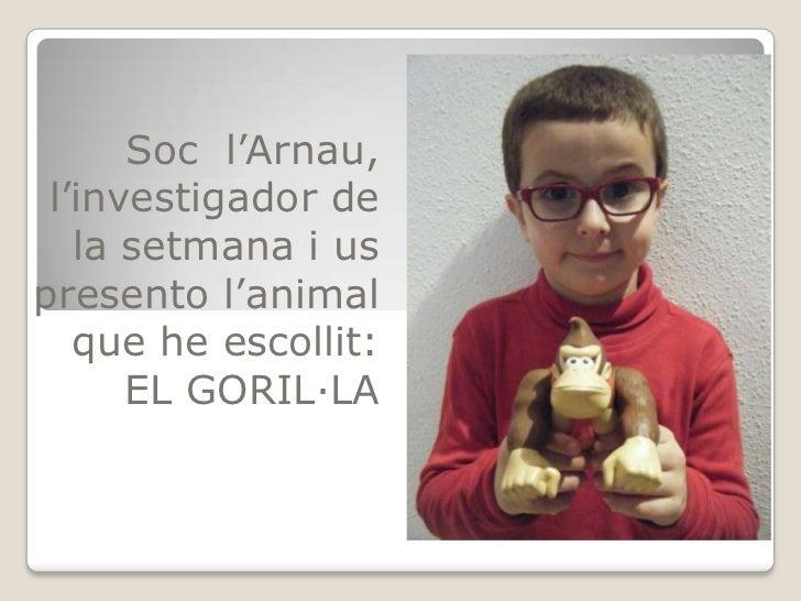 Soc l'Arnau, l'investigador de   la setmana i uspresento l'animal   que he escollit:      EL GORIL·LA