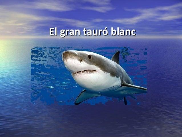 El gran tauró blancEl gran tauró blancNAIARANAIARA