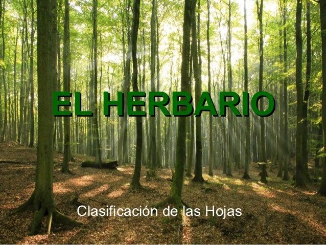 EL HERBARIOEL HERBARIO Clasificación de las Hojas