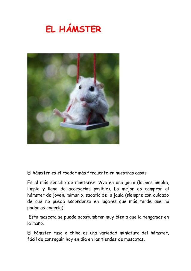 EL HÁMSTER El hámster es el roedor más frecuente en nuestras casas. Es el más sencillo de mantener. Vive en una jaula (lo ...