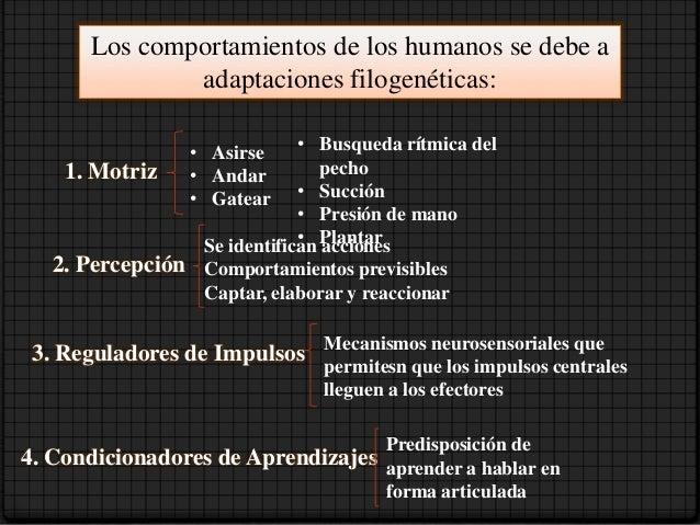 Dimensión Social • Esta se ha desarrollado a partir de ese largo período inicial   de dependencia familiar. Y le permites:...