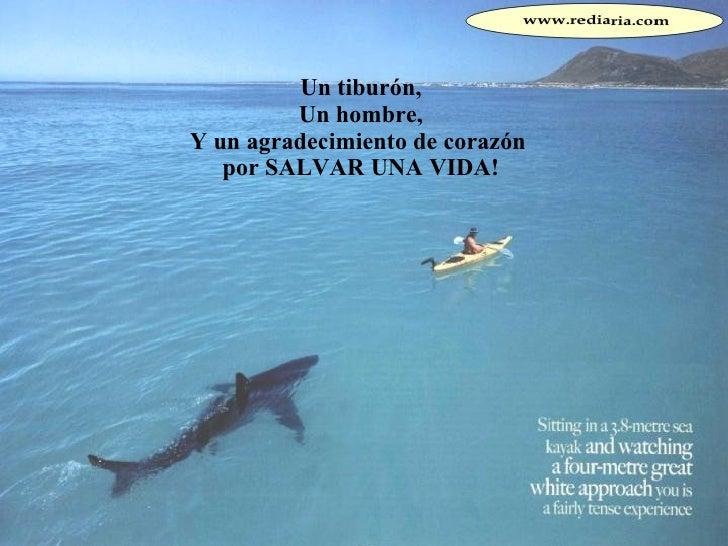 Un tiburón, Un hombre, Y un agradecimiento de corazón  por SALVAR UNA VIDA!