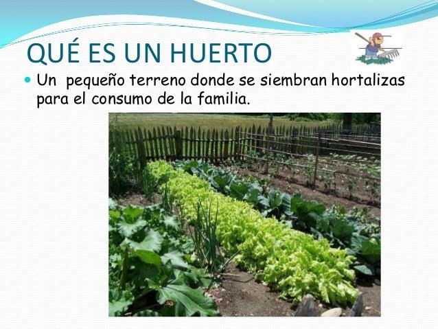 El huerto de mario for Que plantas se siembran en un huerto