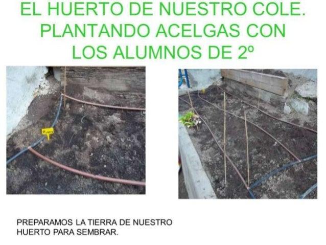 El huerto de_nuestro_cole(1)