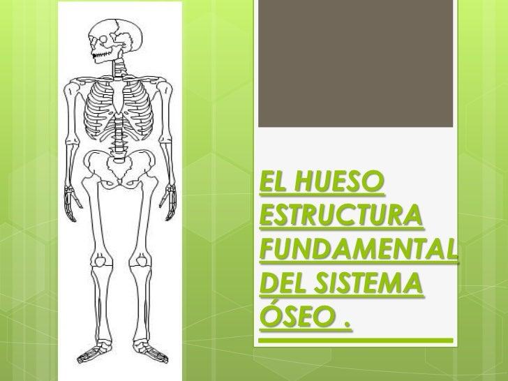 EL HUESOESTRUCTURAFUNDAMENTALDEL SISTEMAÓSEO .