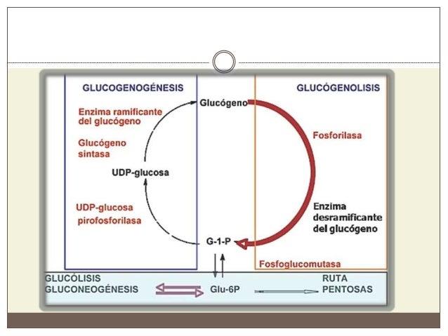 Metabolismo del Glucógeno y Disacaridos