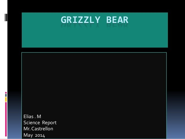 GRIZZLY BEAR Elias . M Science Report Mr. Castrellon May 2014
