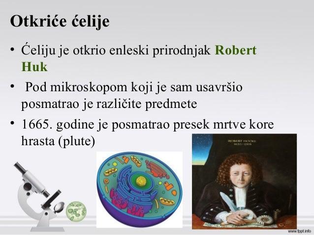 Otkriće ćelije • Ćeliju je otkrio enleski prirodnjak Robert Huk • Pod mikroskopom koji je sam usavršio posmatrao je različ...