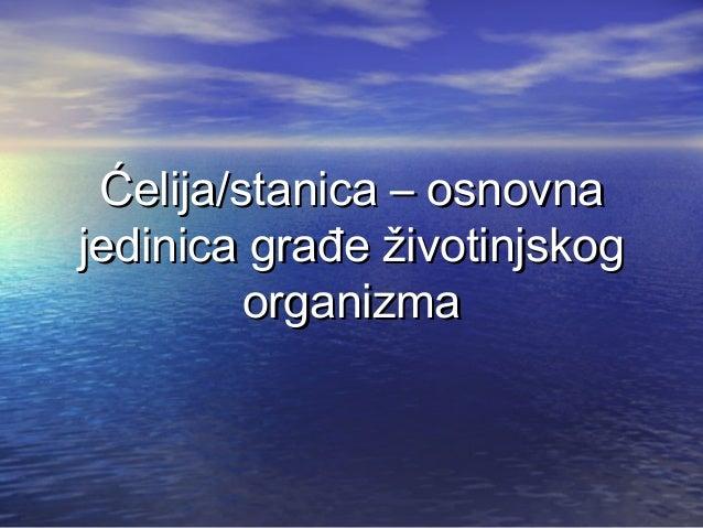 Ćelija/stanica – osnovnajedinica građe životinjskog         organizma