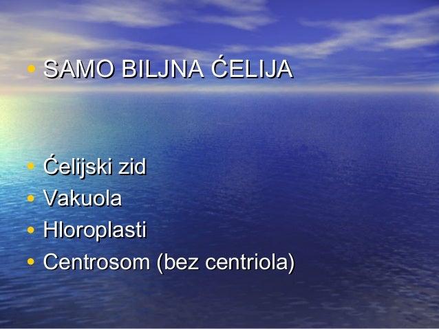 BILJNA ĆELIJA: