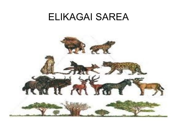 ELIKAGAI SAREA