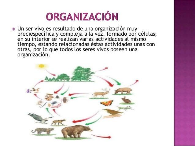 Caracter sticas de los seres vivos for Actividades que se realizan en una oficina wikipedia