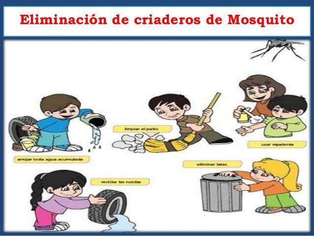 Eliminaci n de criaderos de mosquito for Como eliminar los mosquitos del jardin