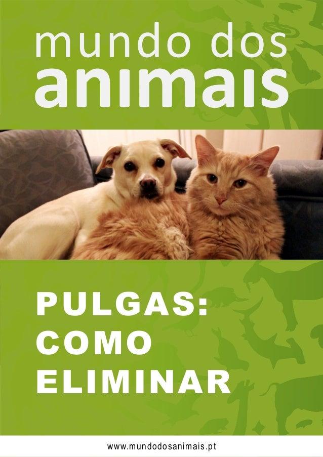 PULGAS: COMO ELIMINAR www.mundodosanimais.pt