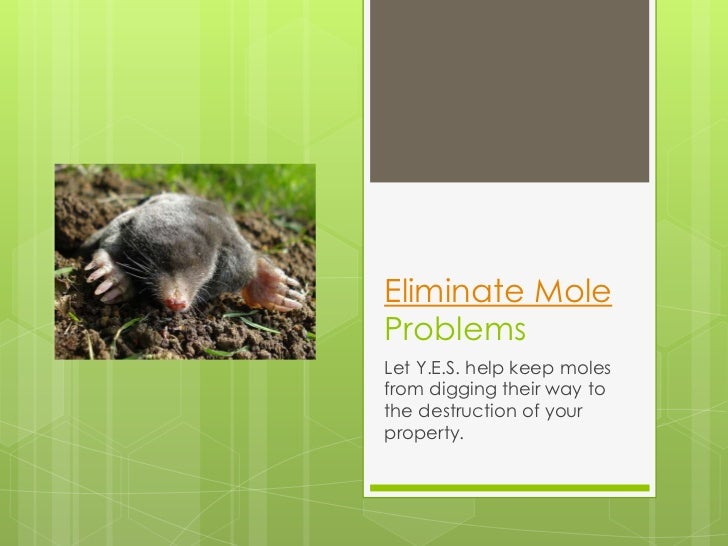 Eliminate MoleProblemsLet Y.E.S. help keep molesfrom digging their way tothe destruction of yourproperty.