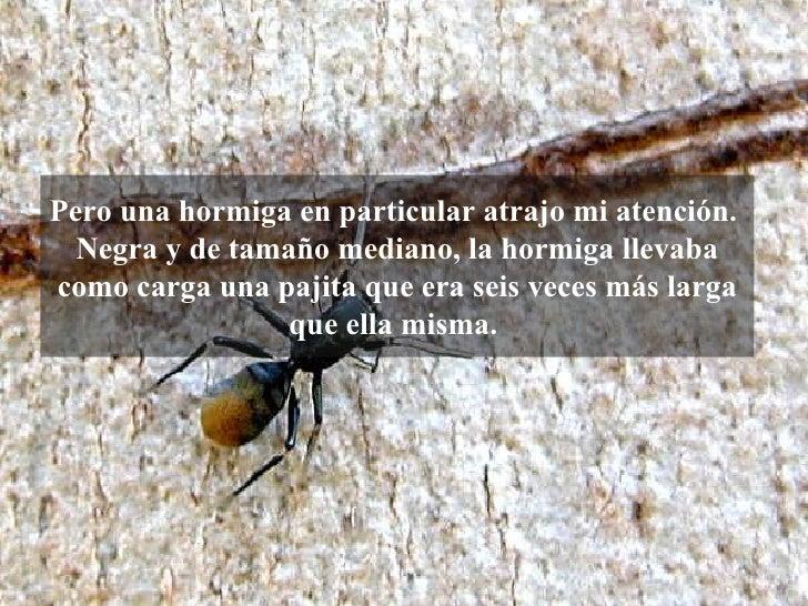 Pero una hormiga en particular atrajo mi   atención. Negra y de tamaño mediano, la hormiga llevaba como carga una pajita ...