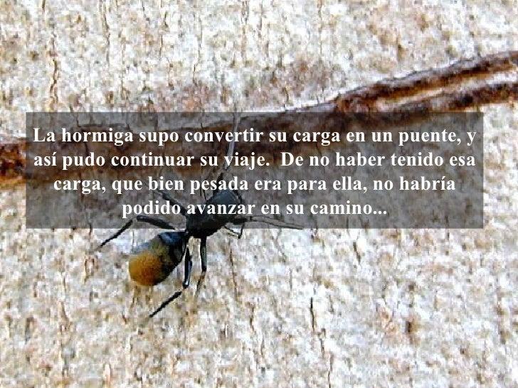 La hormiga supo convertir su carga en un puente, y así pudo continuar su viaje. De no haber tenido esa carga, que bien pe...