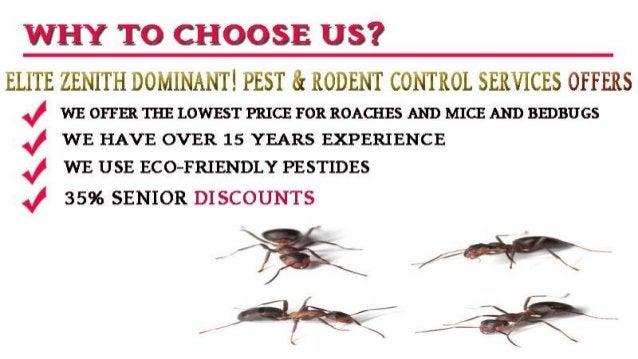 Elite zenith dominant! pest & rodent control services