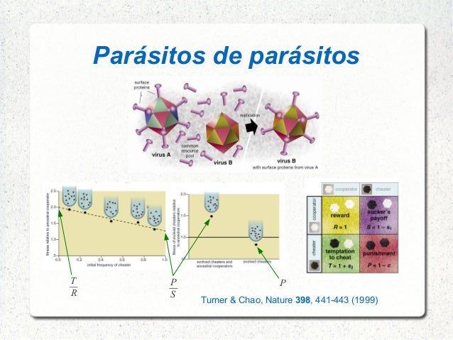 Parásitos de parásitos Turner & Chao, Nature 398, 441-443 (1999) T R P S P