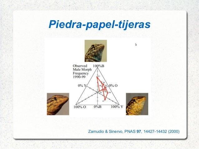 Piedra-papel-tijeras Zamudio & Sinervo, PNAS 97, 14427-14432 (2000)