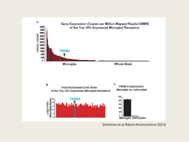 (Hickman et al Nature Neuroscience 2013)