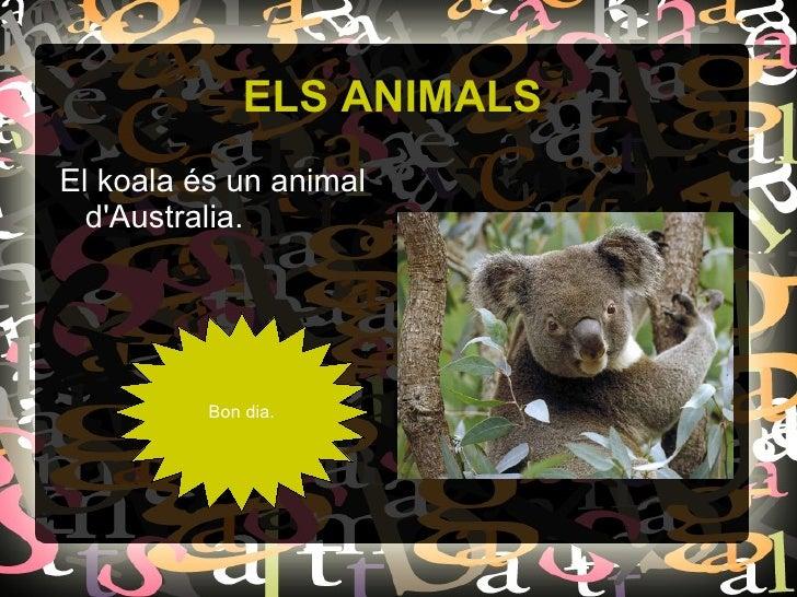ELS ANIMALS <ul><li>El koala és un animal d'Australia. </li></ul>Bon dia.