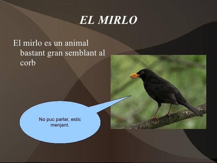EL MIRLO <ul>El mirlo es un animal bastant gran semblant al corb </ul>No puc parlar, estic menjant.