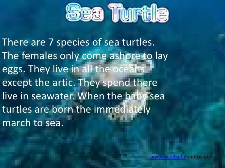 There are 7 species of sea turtles.The females only come ashore to layeggs. They live in all the oceansexcept the artic. T...