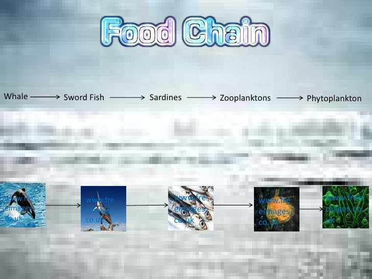 Whale      Sword Fish      Sardines         Zooplanktons        Phytoplanktonwww.fre         www.fre          www.fre     ...