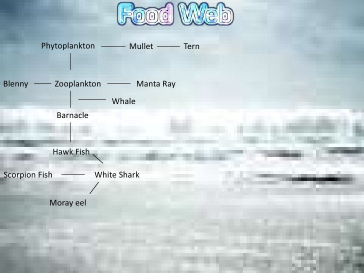 Phytoplankton             Mullet          TernBlenny          Zooplankton            Manta Ray                            ...