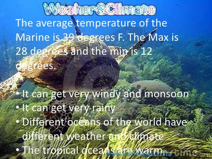 The average temperature of theMarine is 39 degrees F. The Max is28 degrees and the min is 12degrees.• It can get very wind...