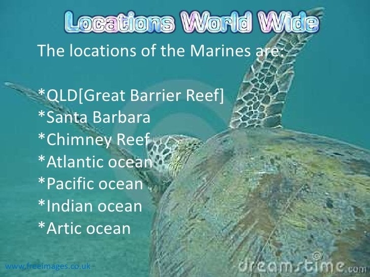 The locations of the Marines are:       *QLD[Great Barrier Reef]       *Santa Barbara       *Chimney Reef       *Atlantic ...