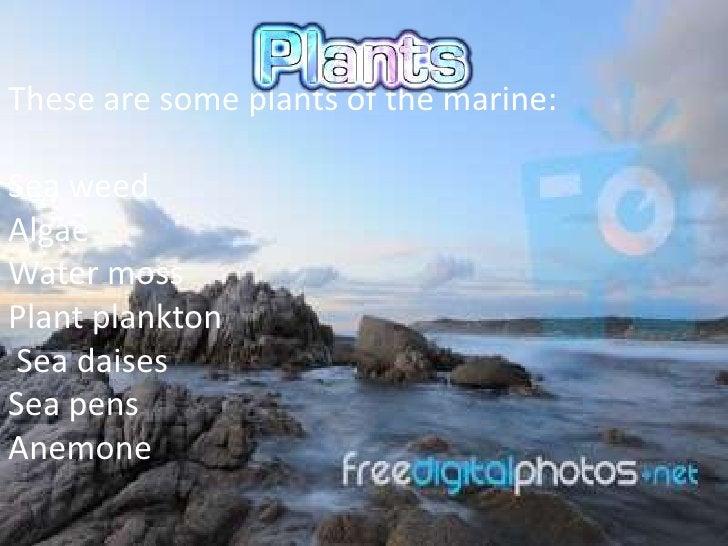 These are some plants of the marine:Sea weedAlgaeWater mossPlant planktonSea daisesSea pensAnemone