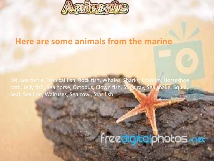 Here are some animals from the marineEel, Sea turtle, Tropical fish, Rock fish, Whales, Sharks, Dolphin, Horseshoecrab, Je...